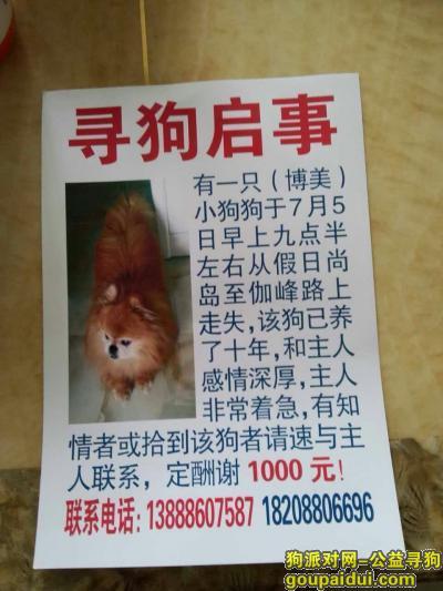 寻狗启示,急寻找丢失在昆明市富民县的小狗!!!,请帮忙转发!,它是一只非常可爱的宠物狗狗,希望它早日回家,不要变成流浪狗。