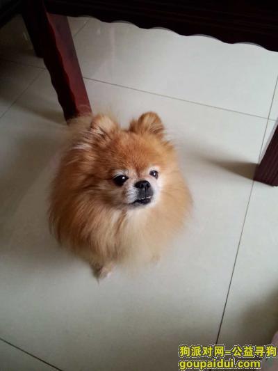寻狗启示,找在昆明市富民县丢失的小狗!!!,它是一只非常可爱的宠物狗狗,希望它早日回家,不要变成流浪狗。
