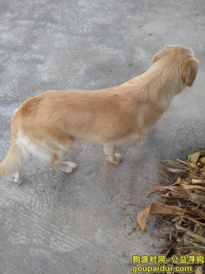 龙岩寻狗启示,8月3日龙岩上杭县才溪高速出口来了一只狗,它是一只非常可爱的宠物狗狗,希望它早日回家,不要变成流浪狗。