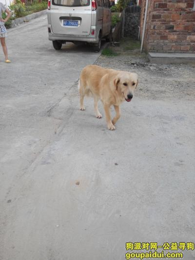 龙岩找狗,狗狗正面照…………………………,它是一只非常可爱的宠物狗狗,希望它早日回家,不要变成流浪狗。