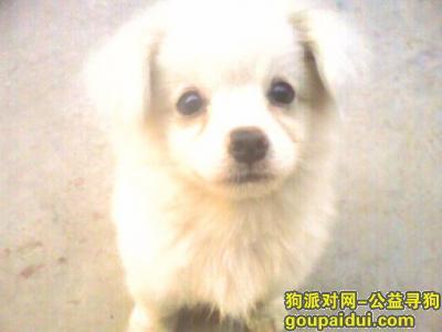 大丰丢狗,LUCKY 我想他了,它是一只非常可爱的宠物狗狗,希望它早日回家,不要变成流浪狗。