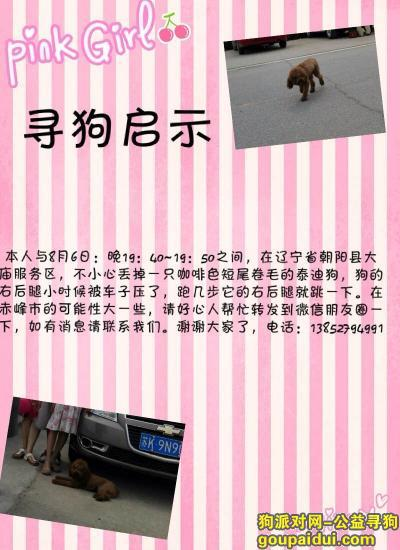 朝阳找狗,寻找咖啡色的泰迪狗,8月6号在辽宁省朝阳县大庙服务区丢,它是一只非常可爱的宠物狗狗,希望它早日回家,不要变成流浪狗。