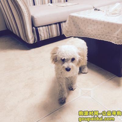 襄阳寻狗主人,狗狗想家捡到一只泰迪,它是一只非常可爱的宠物狗狗,希望它早日回家,不要变成流浪狗。