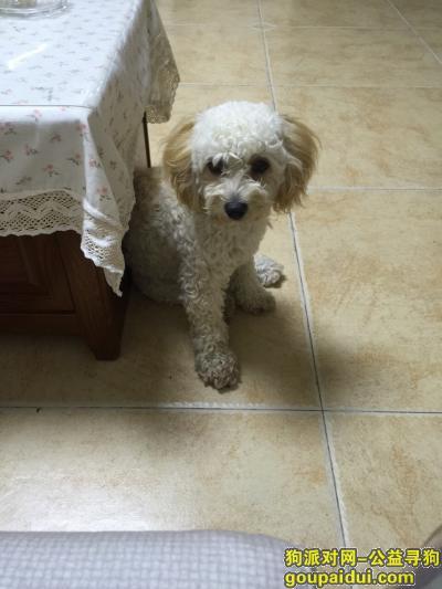 襄阳找狗主人,捡到一只泰迪和比熊串串,它是一只非常可爱的宠物狗狗,希望它早日回家,不要变成流浪狗。