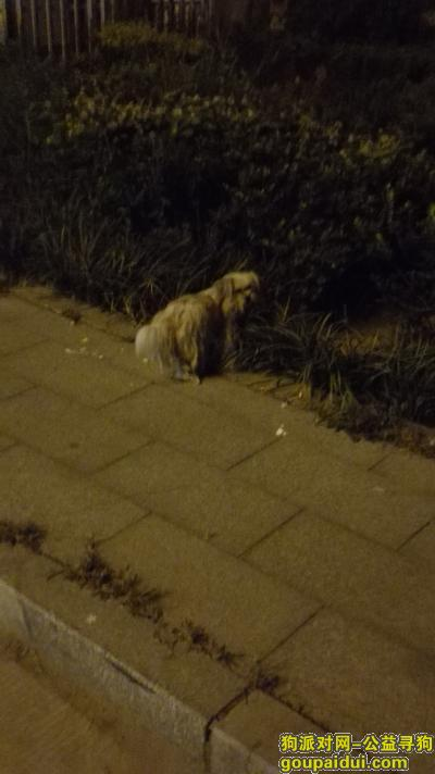 泰安找狗主人,泰安流浪宠物狗望有人领养,它是一只非常可爱的宠物狗狗,希望它早日回家,不要变成流浪狗。