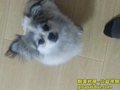 ,寻求爱狗,求好心人帮忙,它是一只非常可爱的宠物狗狗,希望它早日回家,不要变成流浪狗。