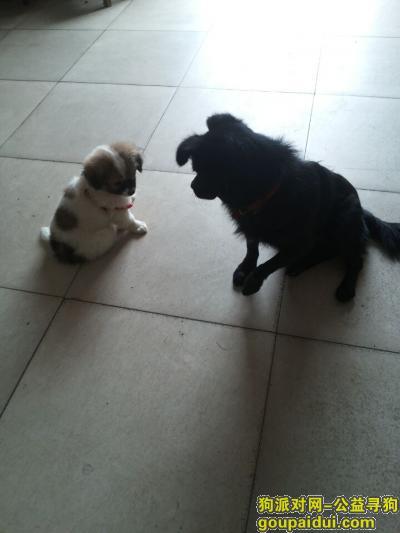寻狗启示,名叫乐乐的小黑狗。大家帮帮忙找一下,它是一只非常可爱的宠物狗狗,希望它早日回家,不要变成流浪狗。