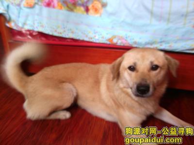 【巢湖找狗】,狗狗不见了请帮忙找下谢谢,它是一只非常可爱的宠物狗狗,希望它早日回家,不要变成流浪狗。