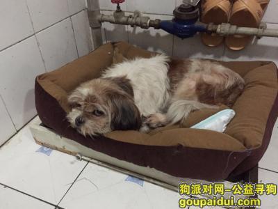 ,寻找丢失爱犬,重金酬谢,它是一只非常可爱的宠物狗狗,希望它早日回家,不要变成流浪狗。