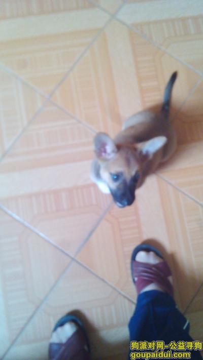 南平找狗,于2015年9月27日在福建南平南纺五区丢失一只土狗。,它是一只非常可爱的宠物狗狗,希望它早日回家,不要变成流浪狗。