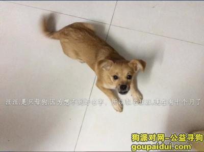 吉安寻狗启示,请大家帮忙帮一只十月大的黄色的,像拉不拉多犬的狗,它是一只非常可爱的宠物狗狗,希望它早日回家,不要变成流浪狗。