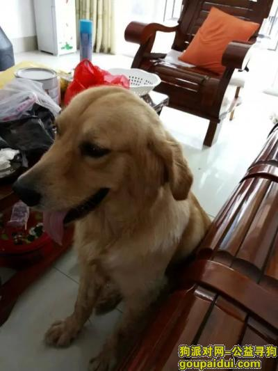 防城港寻狗网,龙江半岛寻爱犬,看到请联系,谢谢了,它是一只非常可爱的宠物狗狗,希望它早日回家,不要变成流浪狗。
