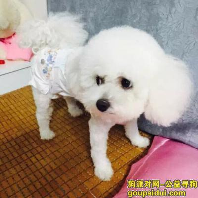 金华捡到狗,白色狗狗、在市场捡到,它是一只非常可爱的宠物狗狗,希望它早日回家,不要变成流浪狗。