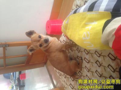 佳木斯捡到狗,佳木斯富锦市楼群小市场,它是一只非常可爱的宠物狗狗,希望它早日回家,不要变成流浪狗。