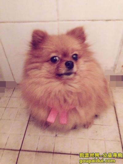 【成都找狗】,它叫妞妞,棕色博美犬,10月6日晚上走丢。非常着急。,它是一只非常可爱的宠物狗狗,希望它早日回家,不要变成流浪狗。