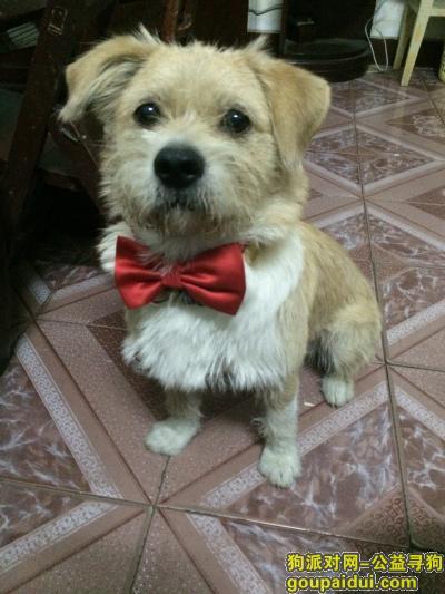 孝感找狗,湖北孝感:寻找爱犬串串狗球球,它是一只非常可爱的宠物狗狗,希望它早日回家,不要变成流浪狗。
