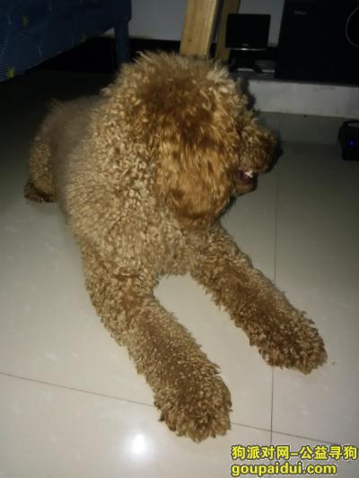 郴州寻狗主人,龙泉路捡到爱犬,盼主来领。,它是一只非常可爱的宠物狗狗,希望它早日回家,不要变成流浪狗。