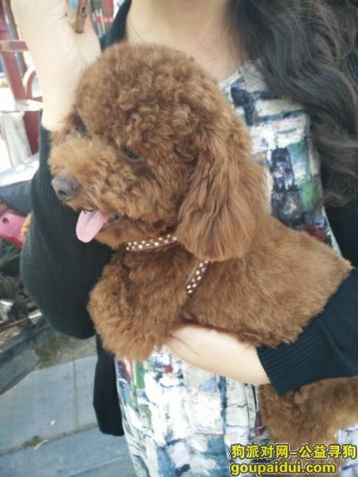 荆门丢狗,走失泰迪一只公的4个月,它是一只非常可爱的宠物狗狗,希望它早日回家,不要变成流浪狗。