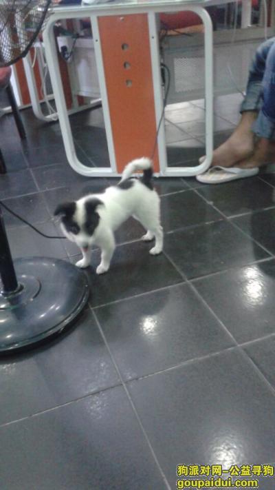 莆田捡到狗,捡到一只狗狗,不吃不和,求主人找到,它是一只非常可爱的宠物狗狗,希望它早日回家,不要变成流浪狗。