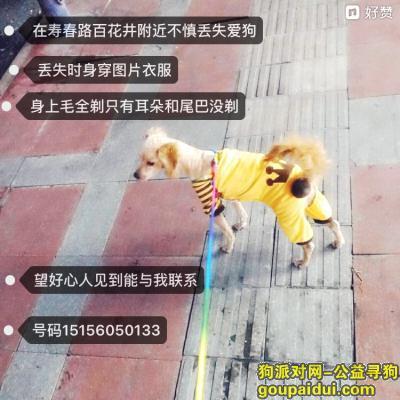寻狗启示,摆脱大家帮忙找回我的爱狗,它是一只非常可爱的宠物狗狗,希望它早日回家,不要变成流浪狗。