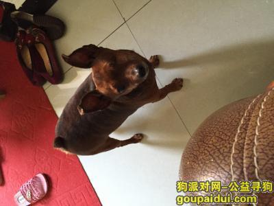 ,鄂州市梁子湖区宅俊街寻狗,它是一只非常可爱的宠物狗狗,希望它早日回家,不要变成流浪狗。