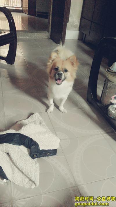 潮州寻狗启示,憨弟,回来吧!我好想你,它是一只非常可爱的宠物狗狗,希望它早日回家,不要变成流浪狗。