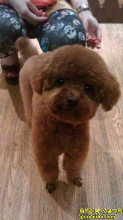 防城港寻狗启示,广西防城港市港口区北部湾大道悬赏五千元寻找泰迪,它是一只非常可爱的宠物狗狗,希望它早日回家,不要变成流浪狗。
