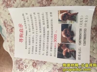 寻狗启示,寻找丢失的爱狗联系电话:13978655153,它是一只非常可爱的宠物狗狗,希望它早日回家,不要变成流浪狗。