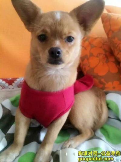寻狗启示,2015 11 07下午通辽市铁南永安六区附近狗狗走丢,它是一只非常可爱的宠物狗狗,希望它早日回家,不要变成流浪狗。
