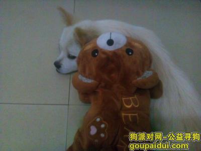 寻狗启示,于福建平潭的龙翔大地丢失一只串串,望好心人帮忙寻找,必有重谢,它是一只非常可爱的宠物狗狗,希望它早日回家,不要变成流浪狗。