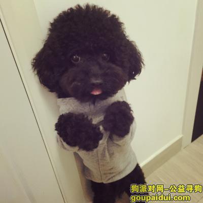寻狗启示,上海市虹口区水电路广灵二路寻狗 望好心人提供线索,它是一只非常可爱的宠物狗狗,希望它早日回家,不要变成流浪狗。