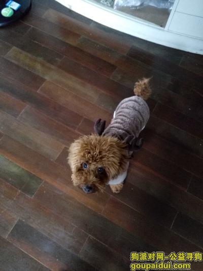 九江丢狗,,,它是一只非常可爱的宠物狗狗,希望它早日回家,不要变成流浪狗。