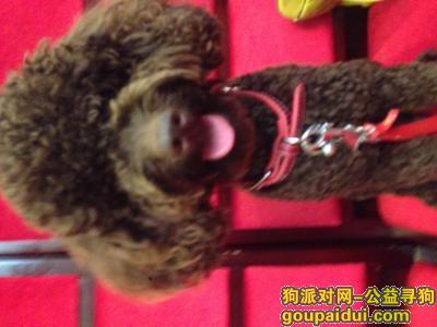 天门寻狗,2000元寻找可怜的巧克力,它是一只非常可爱的宠物狗狗,希望它早日回家,不要变成流浪狗。