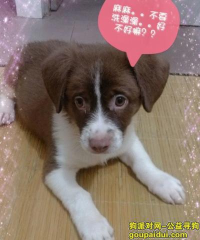 ,广东省茂名高州寻串串一个,它是一只非常可爱的宠物狗狗,希望它早日回家,不要变成流浪狗。