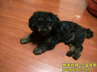 益阳丢狗,寻狗黑色小狗,它是一只非常可爱的宠物狗狗,希望它早日回家,不要变成流浪狗。