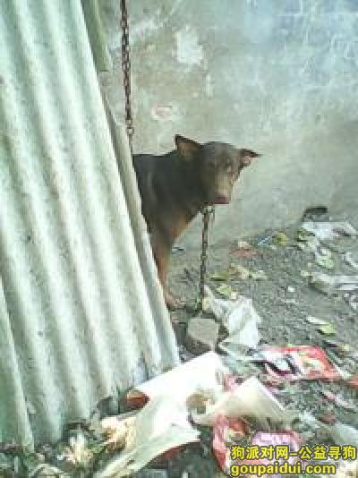临沂丢狗,1,它是一只非常可爱的宠物狗狗,希望它早日回家,不要变成流浪狗。