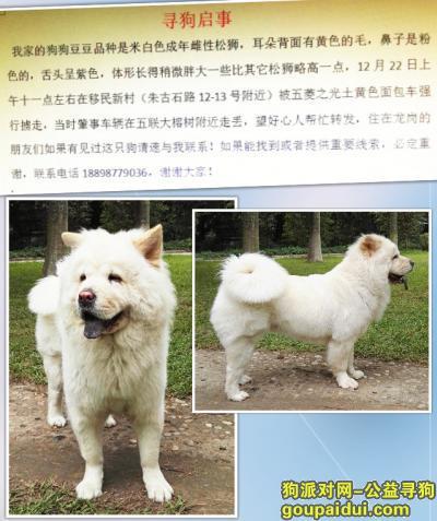 它是一只非常可爱的宠物狗狗