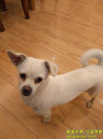 韶关找狗,广东韶关武江区寻找狗狗,它是一只非常可爱的宠物狗狗,希望它早日回家,不要变成流浪狗。