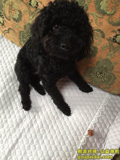 辽阳寻狗启示,在辽阳泓雁超市大概是4:30左右丢的狗,是一只黑色的泰迪狗,名叫:蛋蛋,它是一只非常可爱的宠物狗狗,希望它早日回家,不要变成流浪狗。