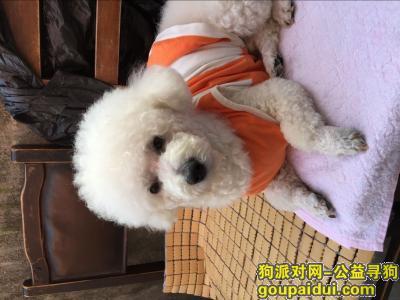 名字叫丢丢,它是一只非常可爱的宠物狗狗