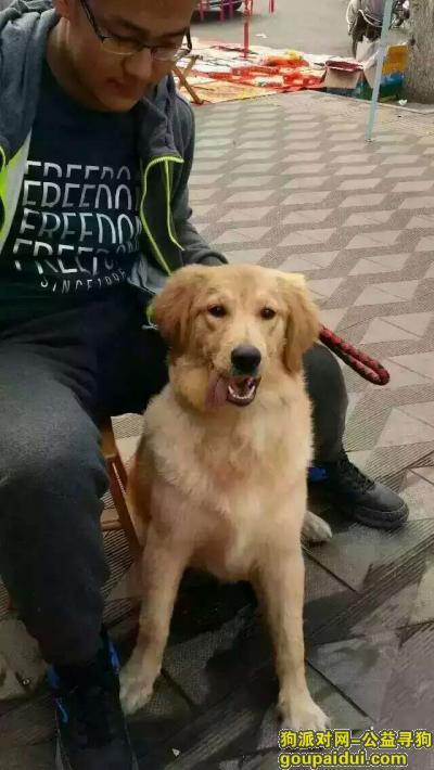 吕梁寻狗启示,孝义晋华市场走丢,望好心人帮忙找找,它是一只非常可爱的宠物狗狗,希望它早日回家,不要变成流浪狗。