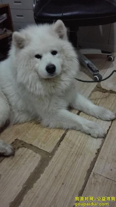 【南京捡到狗】,已找到失主,它是一只非常可爱的宠物狗狗,希望它早日回家,不要变成流浪狗。