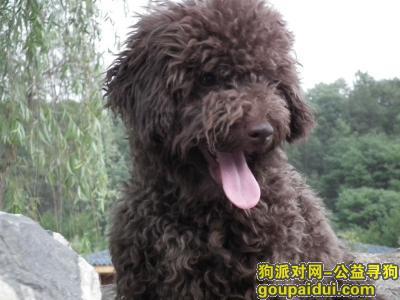 【成都找狗】,寻找丢失的狗狗~好人一生平安,它是一只非常可爱的宠物狗狗,希望它早日回家,不要变成流浪狗。