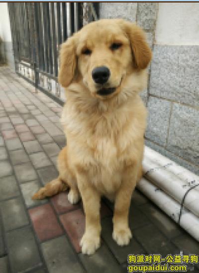 三门峡寻狗启示,感谢好心人,它是一只非常可爱的宠物狗狗,希望它早日回家,不要变成流浪狗。