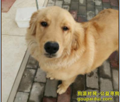 三门峡找狗,感谢好心人,它是一只非常可爱的宠物狗狗,希望它早日回家,不要变成流浪狗。