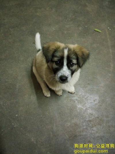 池州寻狗启示,1月27日晚,在池州殷汇显化村长龙组丢失一条短腿胖胖狗,它是一只非常可爱的宠物狗狗,希望它早日回家,不要变成流浪狗。