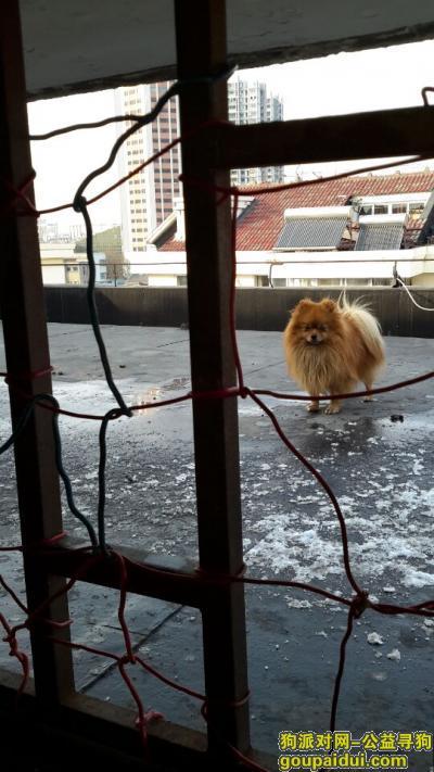 淮安找狗主人,谁家的博美丢了!清河区上海路至加州城至丰登路段,它是一只非常可爱的宠物狗狗,希望它早日回家,不要变成流浪狗。