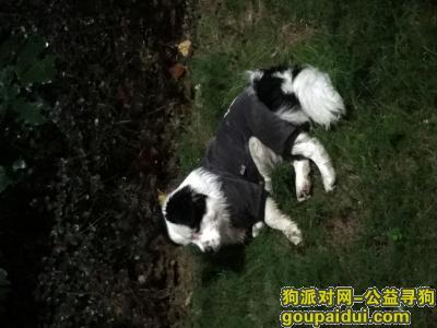 五指山寻狗启示,在海南穿衣服的狗狗,路边,它是一只非常可爱的宠物狗狗,希望它早日回家,不要变成流浪狗。