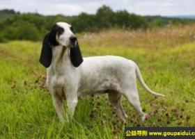艾瑞格斯犬 - 聪明,温顺沉著,对大人和孩子都很友善