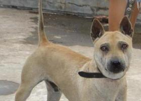 斯洛伐克猎犬 - 具有令人称奇的定位意识